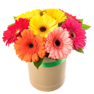 Цветы в коробке «Микс гербер»